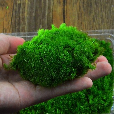 DIY Mirco Landscape Moss Plant Natural Wild Leucobryum Bowringii Glass Bottle Decorations