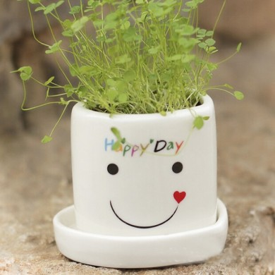 DIY Mini Lucky Angel Grass Potted Lovers Plant Desktop Decor