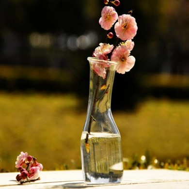 Flower Hydroponic Plants Shelving Glass Bottle Vase Home Garden Wedding Party Decoration