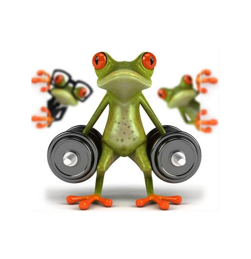 3D Car Frog Sticker Funny Decal High Temperature & Waterproof for Car Body Car Window (Car Decals and Stickers: Wine Frog)  - buy with discount