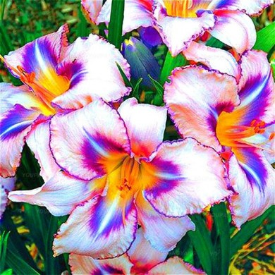 Egrow 100PCS/Pack Lily Seeds Rare Peruvian Lily Alstroemeria Bonsai Plants Mix-Color Beautiful Lilies Flower For Home & Garden D