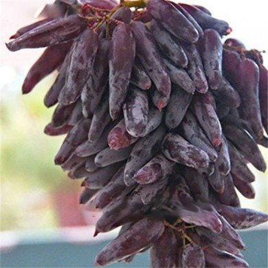 Egrow 50 Pcs/Pack Mixed Finger Grape Seed Garden Planting Potted Fruit Grapes Plant Seeds
